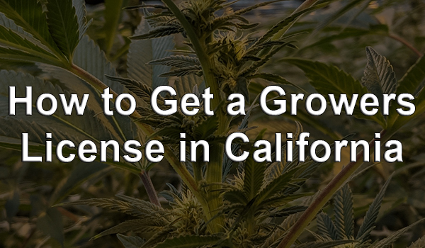 How to Get a Growers License in California — Cannabis Permits